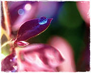 Water Drop Print by Judi Bagwell
