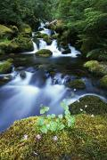 Riversides Prints - Water Flowing Along Creek Print by Natural Selection Craig Tuttle