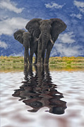 Elephants Digital Art Originals - Water for Elephants by Beverly Hanson