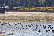 Water Fowl At Lake Wilhelmina Arkansas Print by Douglas Barnard