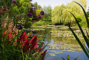 Nympheas Prints - Water Garden 2 at Giverny Print by Alex Cassels
