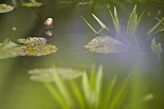 Waterlily Art - Water Garden by Heiko Koehrer-Wagner