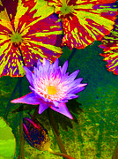 Lilies Digital Art - Water Lilies by Amy Vangsgard