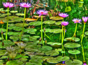 Governors Prints - Water Lilies Print by David Bearden
