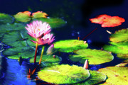 Water Lilies Photo Posters - Water Lilies Poster by Harry Spitz