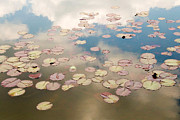Julia Hiebaum Metal Prints - Water Lilies in Schoenbrunn Vienna Austria Metal Print by Julia Hiebaum