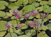 Water Lilies Framed Prints Prints - Water lilies Print by John Edebohls