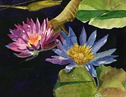 Pads Paintings - Water Lilies by Lynne Reichhart