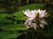 Heiko Mahr - Water lilly