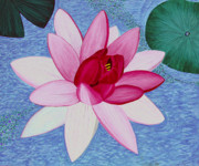 Water Lilly Prints - Water Lilly Print by Loraine LeBlanc