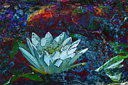 Water Lily Abstract Print by Phyllis Denton