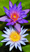 Lotus Blossoms Photos - Water Lily Blossoms by Kerri Ligatich