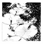 Water Reflections Drawings - Water Lily Ink Drawing by John Lautermilch