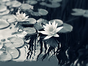 Nature  Digital Art Posters - Water Lily Poster by Jessica Jenney