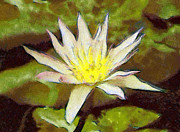 Harmony Painting Posters - Water lily Poster by Odon Czintos