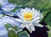 Flower Painting Originals - Water Lily by Sam Sidders