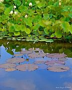 Water Lilies Photo Posters - Water Lily Sky Poster by Nada Frazier