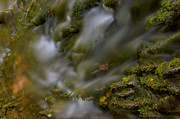 Stokes State Forest Prints - Water Movement 19 Print by Stephen  Vecchiotti