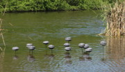 Lake Ceramics Metal Prints - Water Mushrooms Metal Print by Dawn Whitehand