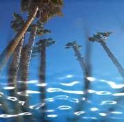Tricks Prints - Water Palms Print by Stephen Lawrence Mitchell