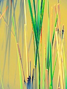 Reflections In Water Prints - Water Reeds Soft Print by Beth Akerman