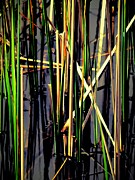 Dried Reeds Posters - Water Reeds Two Dark Poster by Beth Akerman