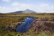 Turf Art - Water Source In Irish Bog by Design Pics / Peter Zoeller