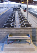 Cowhouse Art - Water Trough and Cattle Cubicles by Jaak Nilson