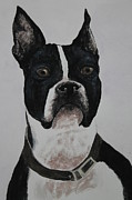 Boston Terrior Prints - Watercolor my loyal boston Print by Ralph Hecht