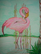 Flamingos Drawings - Watercolor Pencil Flamingo by Christina A Pacillo