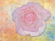 Digitally Enhanced Posters - Watercolor Rose Poster by Susan Candelario