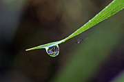 Bill Morgenstern - Waterdrop Spider