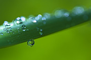 Waterdrops Prints - Waterdrops and Bokeh Print by Zoe Ferrie