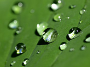 Vegetation Metal Prints - Waterdrops Metal Print by Melanie Viola