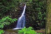 Lush Green Posters - Waterfall-1-St Lucia Poster by Chester Williams