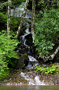 Cranberry Framed Prints - Waterfall along Cranberry River Framed Print by Thomas R Fletcher