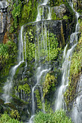 Watercress Prints - Waterfall at Columbia River Washington Print by Ted J Clutter and Photo Researchers
