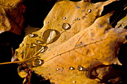 Fallen Leaf On Water Photo Metal Prints - Waterfall Metal Print by Burney Lieberman