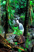 Tropical Rainforest Framed Prints - Waterfall El Yunque National Forest Mirror Image Framed Print by Thomas R Fletcher