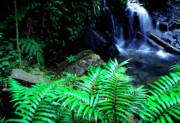 Tropical Rainforest Framed Prints - Waterfall El Yunque National Forest Framed Print by Thomas R Fletcher