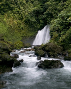 Costa Originals - Waterfall in La Fortuna by Patricia Bolgosano