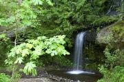 Ground Level View Posters - Waterfall In The Forest Poster by Craig Tuttle