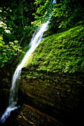 Finger Lakes Posters - Waterfall in the Woods Poster by Mike Horvath