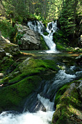 Carpathians Originals - Waterfall  by Ioan Todor