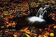 Autumn Landscape Pyrography Prints - Waterfall Print by Irinel Cirlanaru