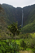 Waimea Valley Prints - Waterfall Over The Cliffs Of Waipio Print by Todd Gipstein
