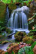 Rainforest Posters - Waterfall Poster by Patti Sullivan Schmidt