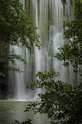 Rain Forest Macaws Prints - Waterfall through Trees Print by Juan Carlos Vindas