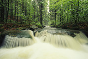 Woodland Scenes Posters - Waterfall Time Exposure,   Bayerischer Poster by Norbert Rosing