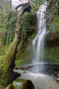 Oregon Scenery - Waterfall Troutdale Oregon by Dustin K Ryan